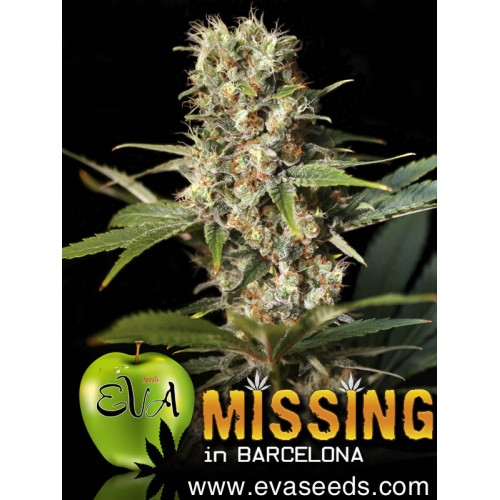 MISSING IN BARCELONA gift