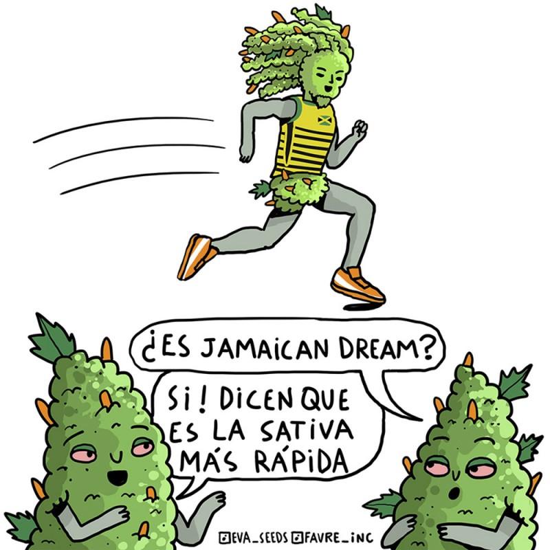 STICKER EVA SEEDS X FAVRE INC JAMAICAN DREAM
