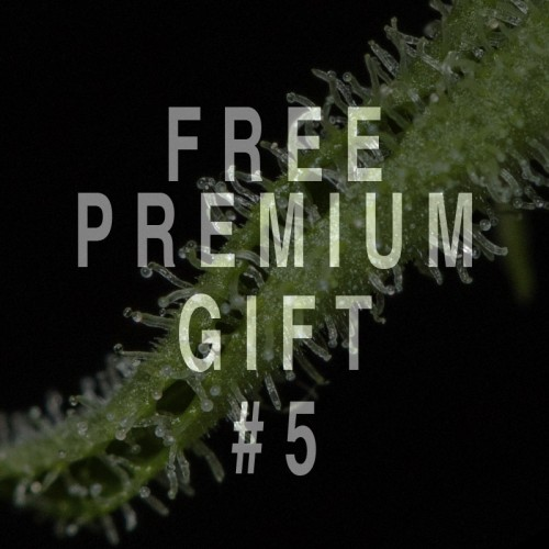 PREMIUM GIFT PACK FROM 1000€