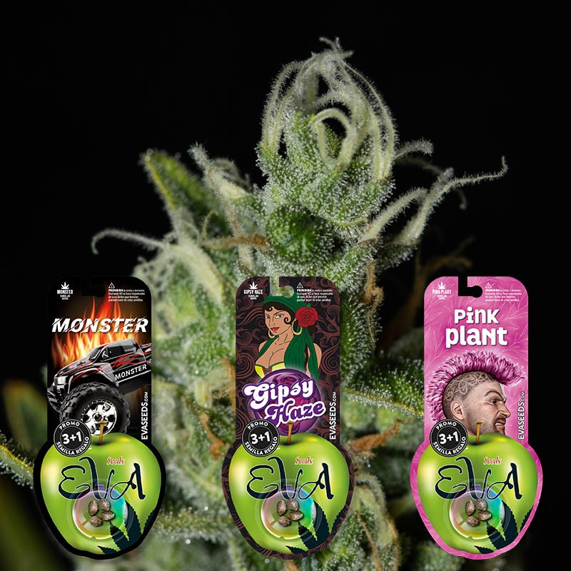 PACK SATIVA LOVERS 1