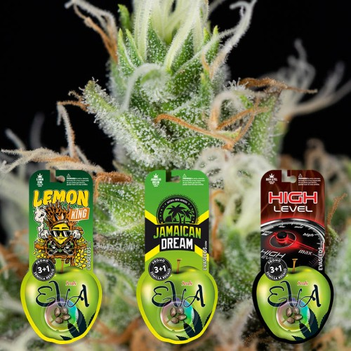 PACK SATIVA LOVERS 2