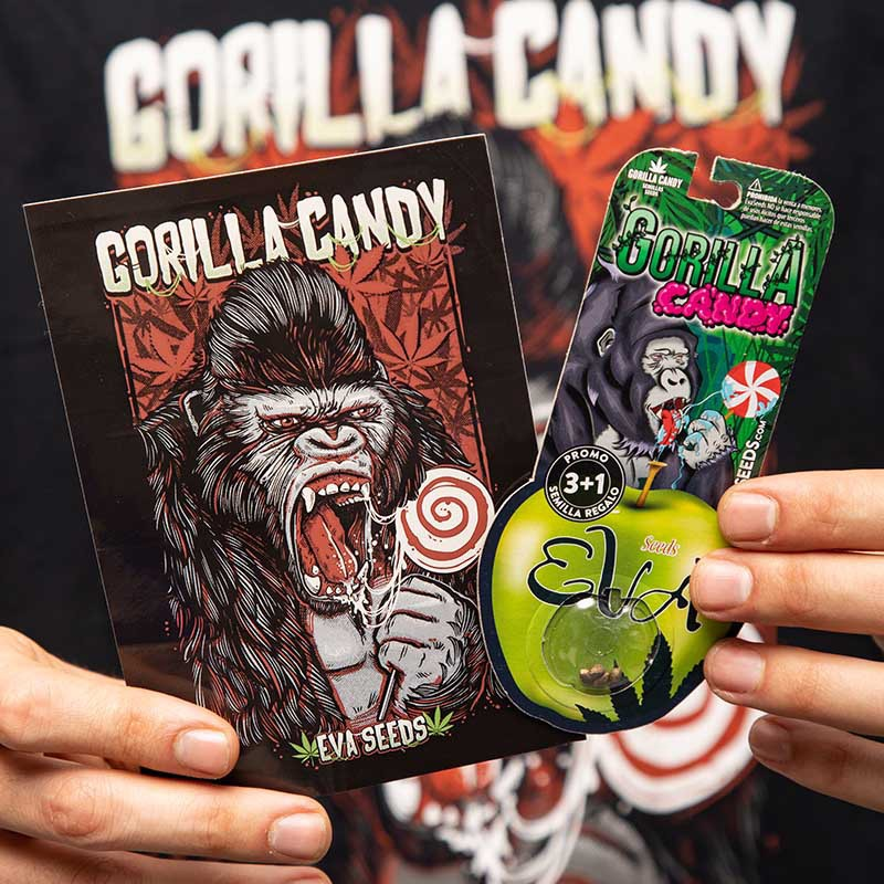 PACK GORILLA CANDY LOVERS