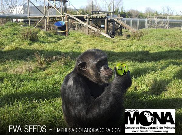 Eva Seeds collaborates with Fundación Mona
