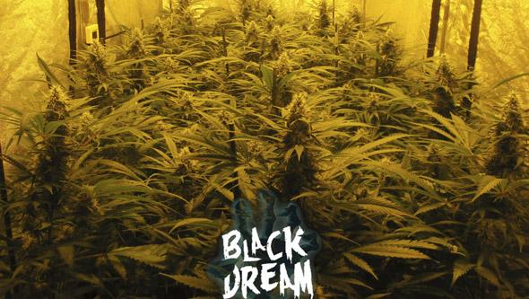 Black Dream da Eva Seeds em interior