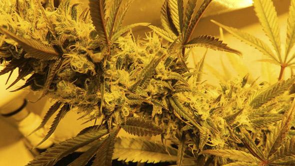 High Level da Eva Seeds em interior