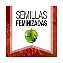 Feminized Seeds
