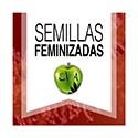 Semi Feminizzati