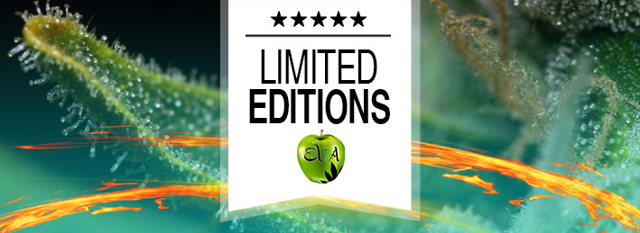 Limited Editions Eva Seeds