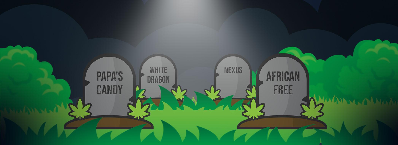 Cementerio Eva Seeds