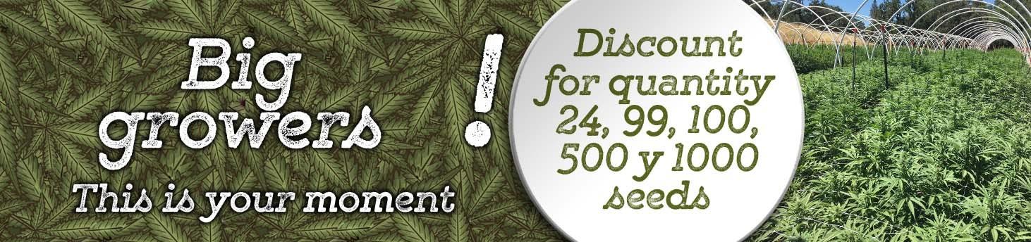 Seeds discount