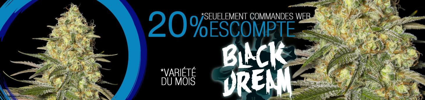 BLACK DREAM fr