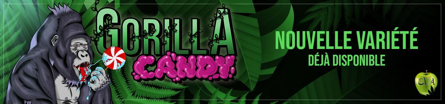 Nueva variedad: Gorilla Candy fr